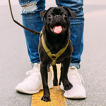 Hundeschule Dorsten